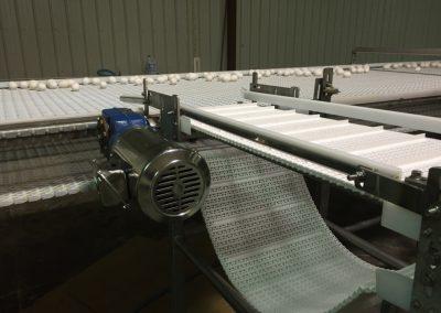Dirty Egg Conveyor